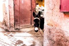 Mandarin-Oriental-Marrakech-Esel